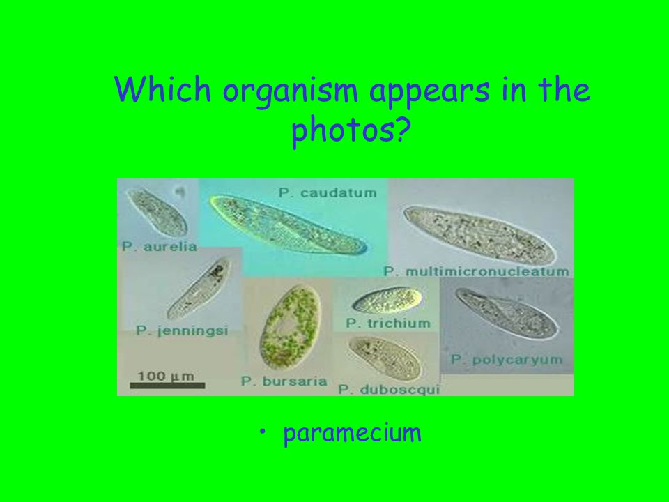 Which types of single-celled organisms may contain chlorophyll.
