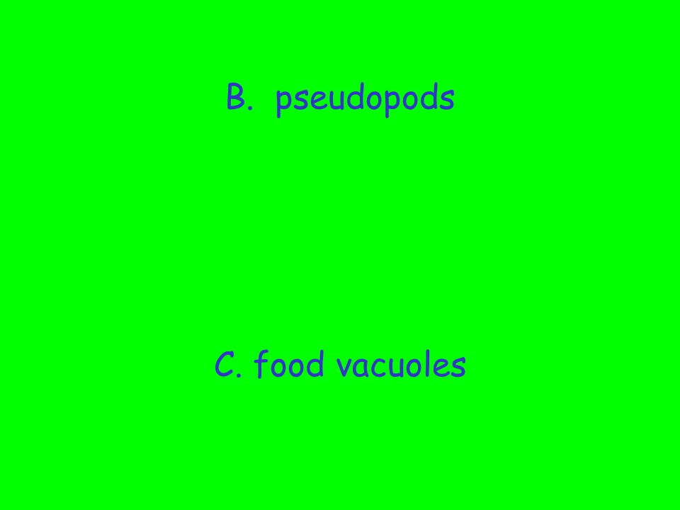 What organelle engulfs food.A. cytoplasm B. pseudopods C.
