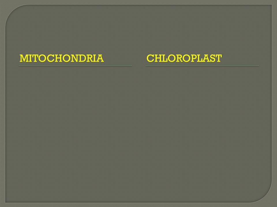 MITOCHONDRIA CHLOROPLAST