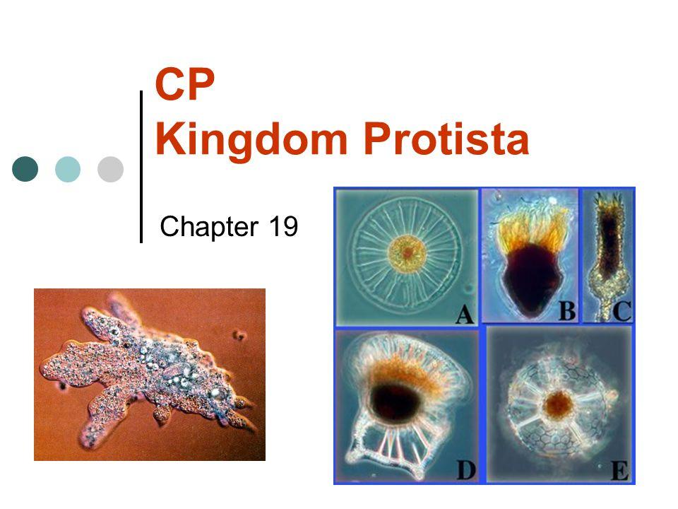 CP Kingdom Protista Chapter 19