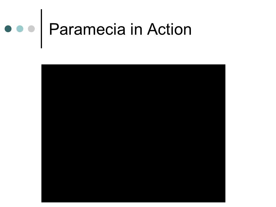 Paramecia in Action