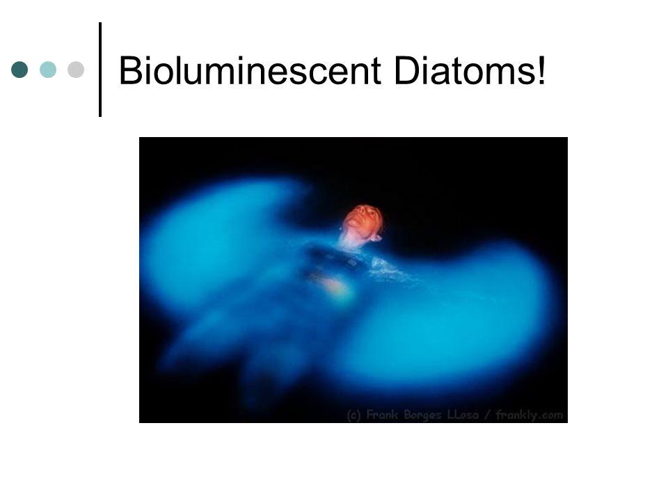 Bioluminescent Diatoms!