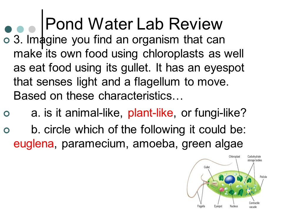 pond lab Name protists 19-1 in r pond just as larger orgarusms do, protists have particular habitats in which they thrive and grow some will be found near the sur.