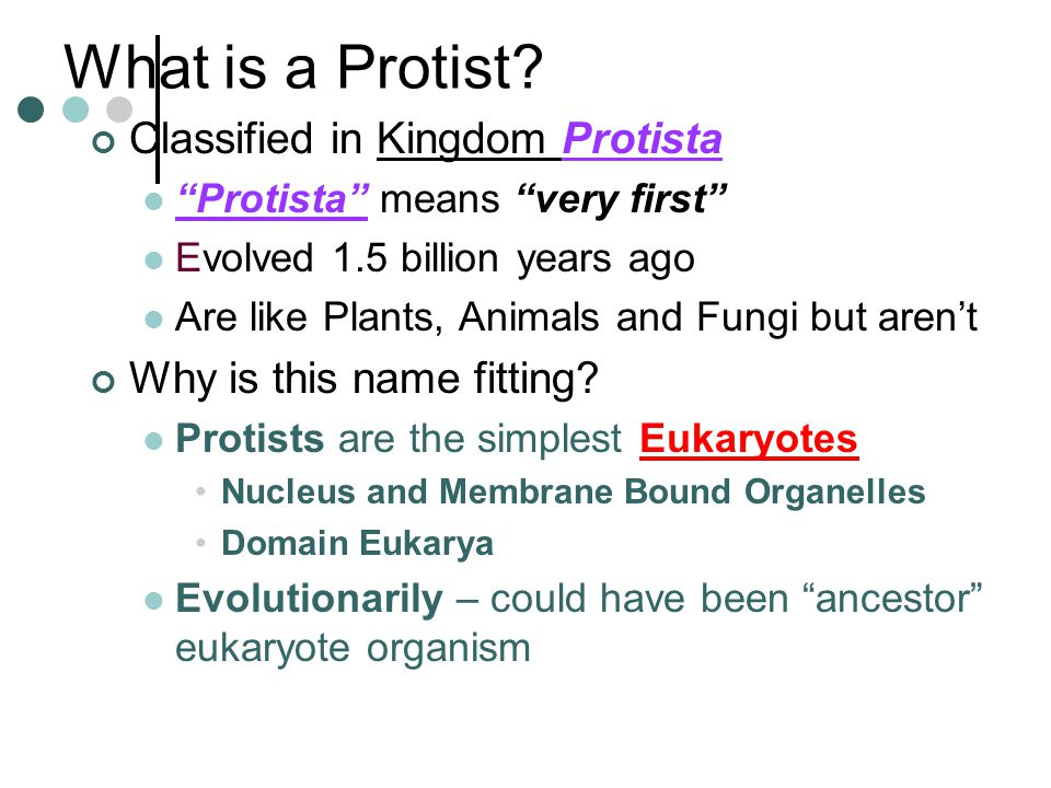 What is a Protist.