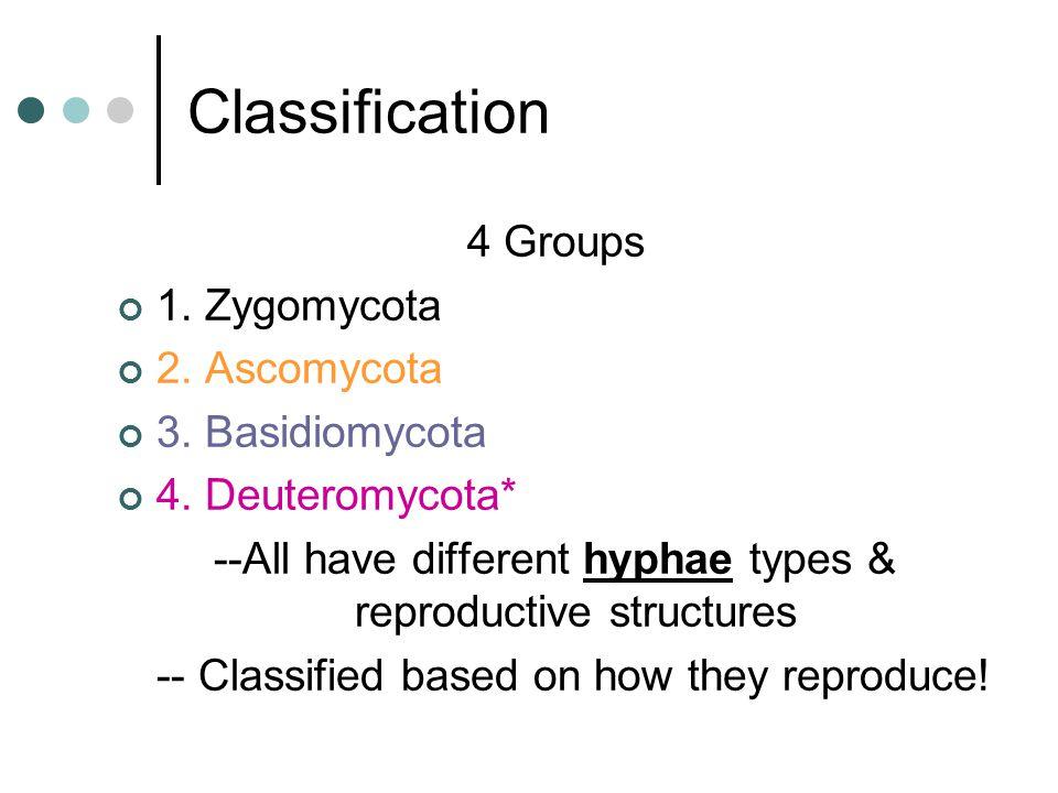 Classification 4 Groups 1.Zygomycota 2. Ascomycota 3.
