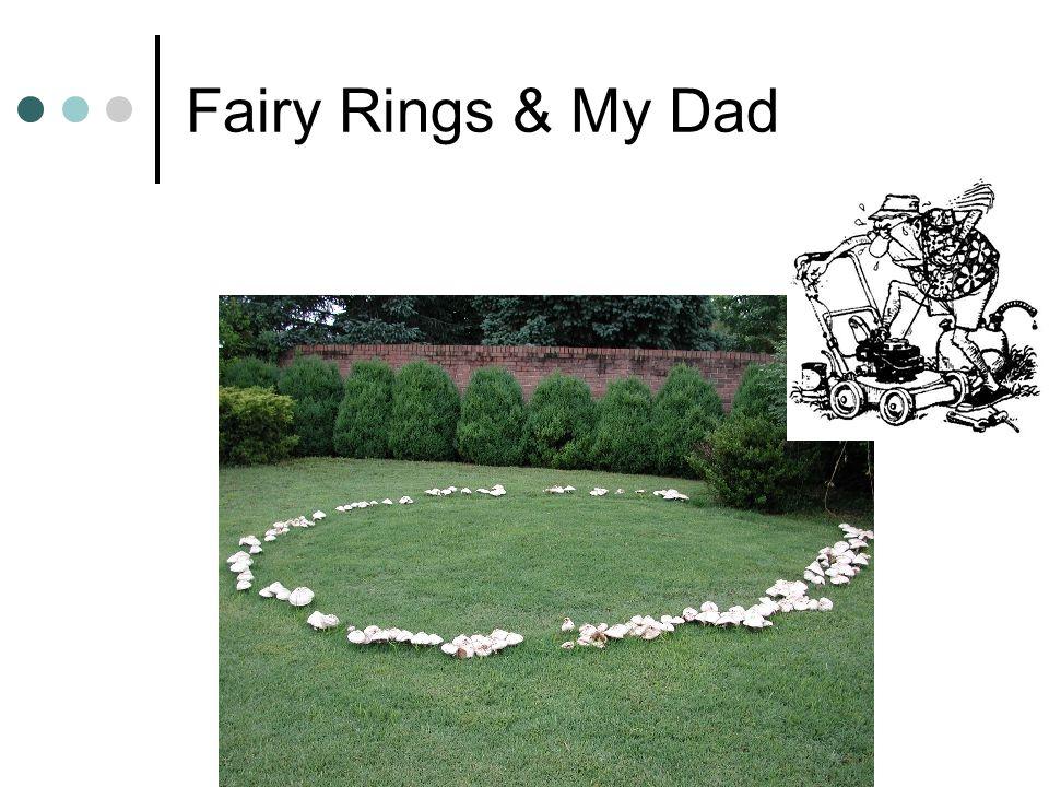 Fairy Rings & My Dad