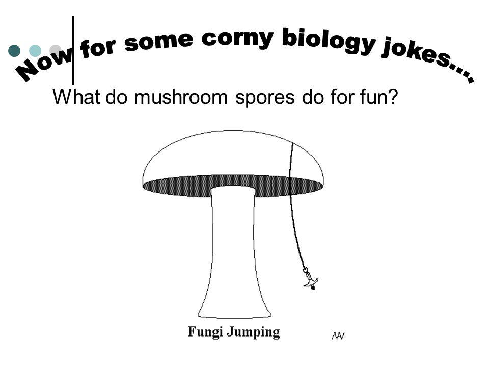 What do mushroom spores do for fun?
