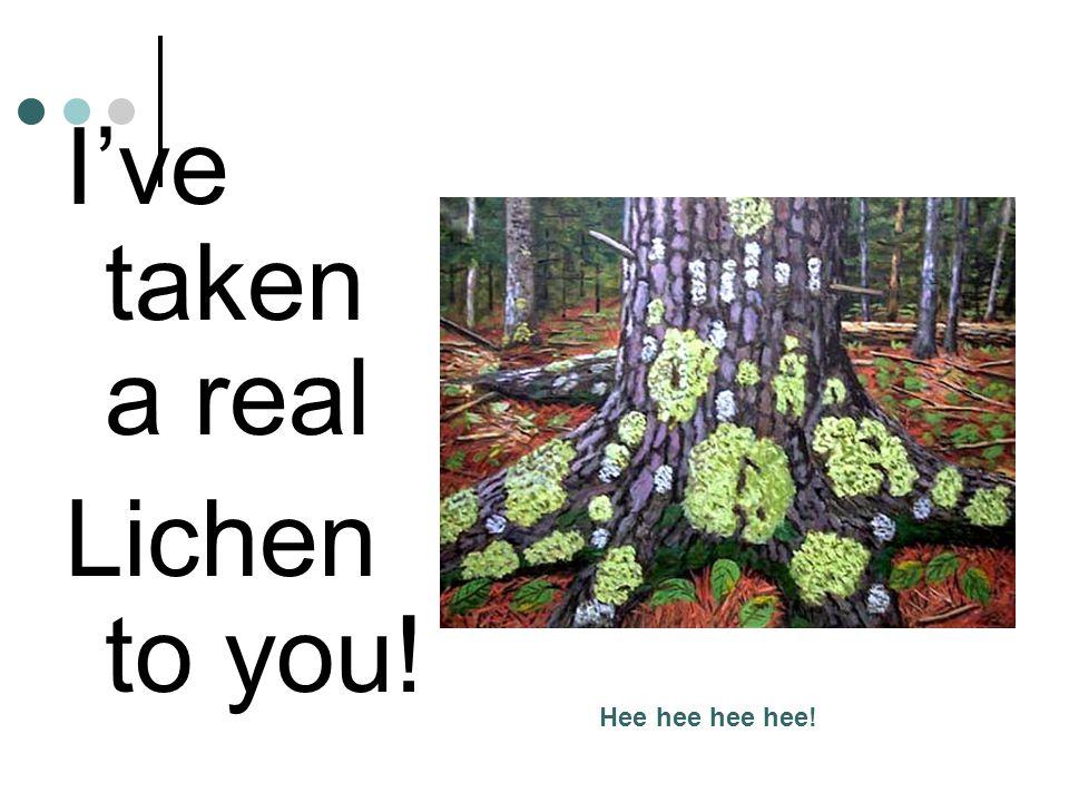 I've taken a real Lichen to you! Hee hee hee hee!