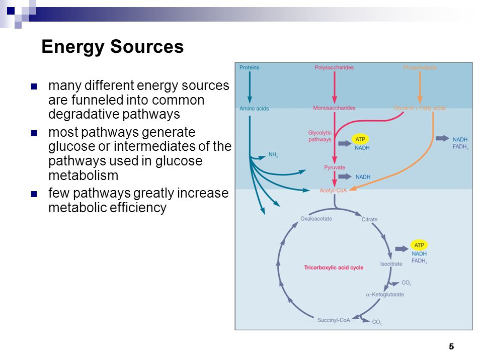 5 Energy Sources many different energy sources are funneled into common degradative pathways most pathways generate glucose or intermediates of the pa