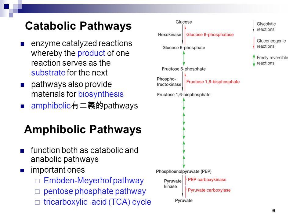 6 Amphibolic Pathways function both as catabolic and anabolic pathways important ones  Embden-Meyerhof pathway  pentose phosphate pathway  tricarbo