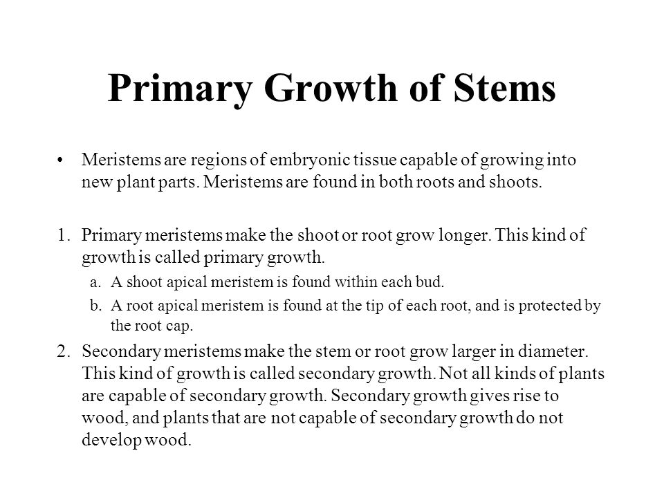 Meristems are regions of embryonic tissue capable of growing into new plant parts. Meristems are found in both roots and shoots. 1.Primary meristems m