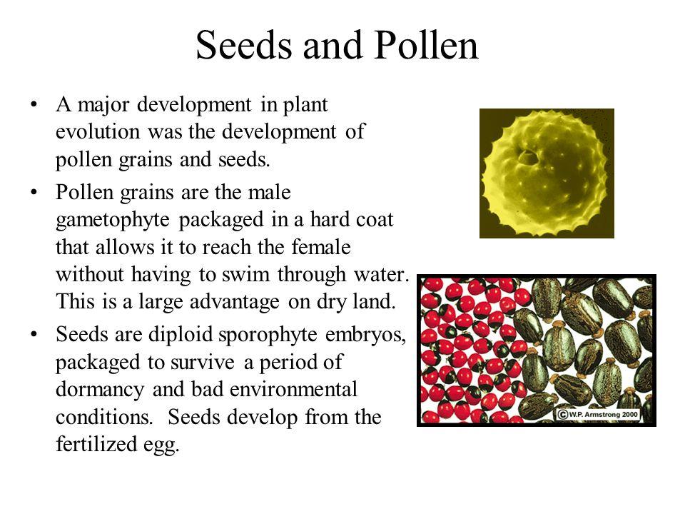 Seeds and Pollen A major development in plant evolution was the development of pollen grains and seeds. Pollen grains are the male gametophyte package