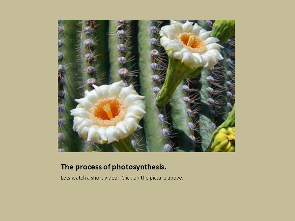 The process of photosynthesis. Lets watch a short video. Click on the picture above.
