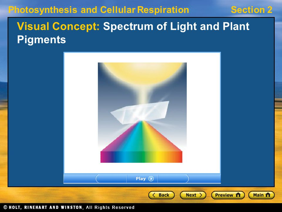 Photosynthesis and Cellular RespirationSection 2 Visual Concept: Spectrum of Light and Plant Pigments