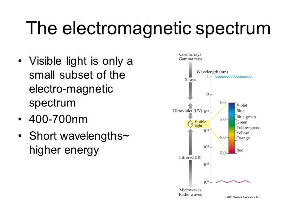 The electromagnetic spectrum Visible light is only a small subset of the electro-magnetic spectrum 400-700nm Short wavelengths~ higher energy