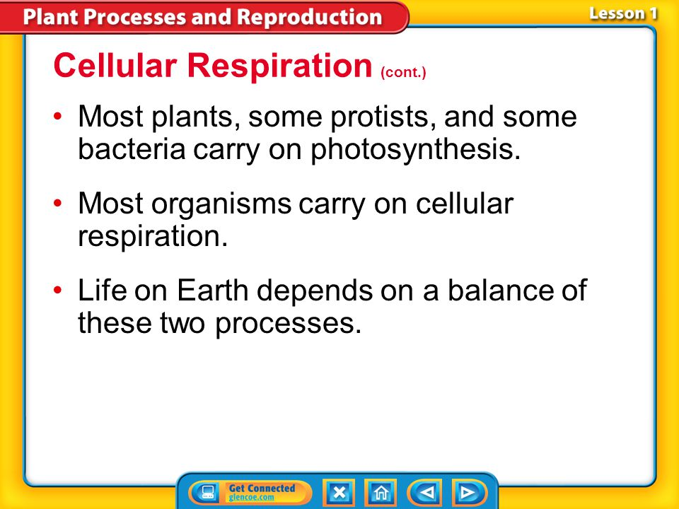 Lesson 1-3 Cellular Respiration (cont.) What is cellular respiration?
