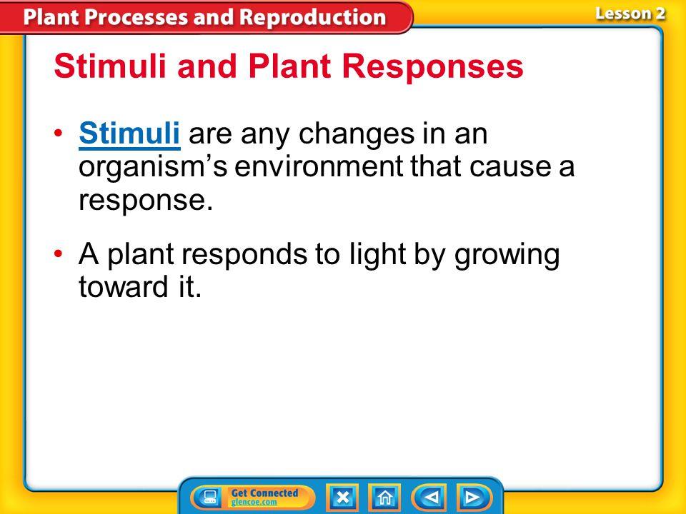 Lesson 2 Reading Guide - Vocab stimulus tropism photoperiodism plant hormone Plant Responses