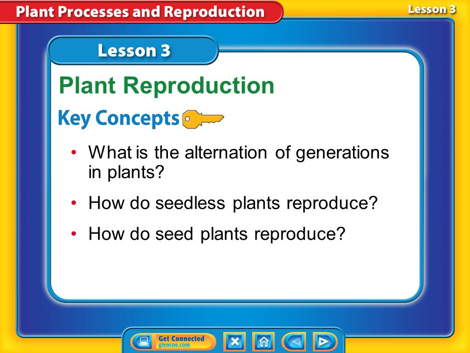 Lesson 2 - Now 3.Plants do not produce hormones. 4.Plants can respond to their environments. Do you agree or disagree?