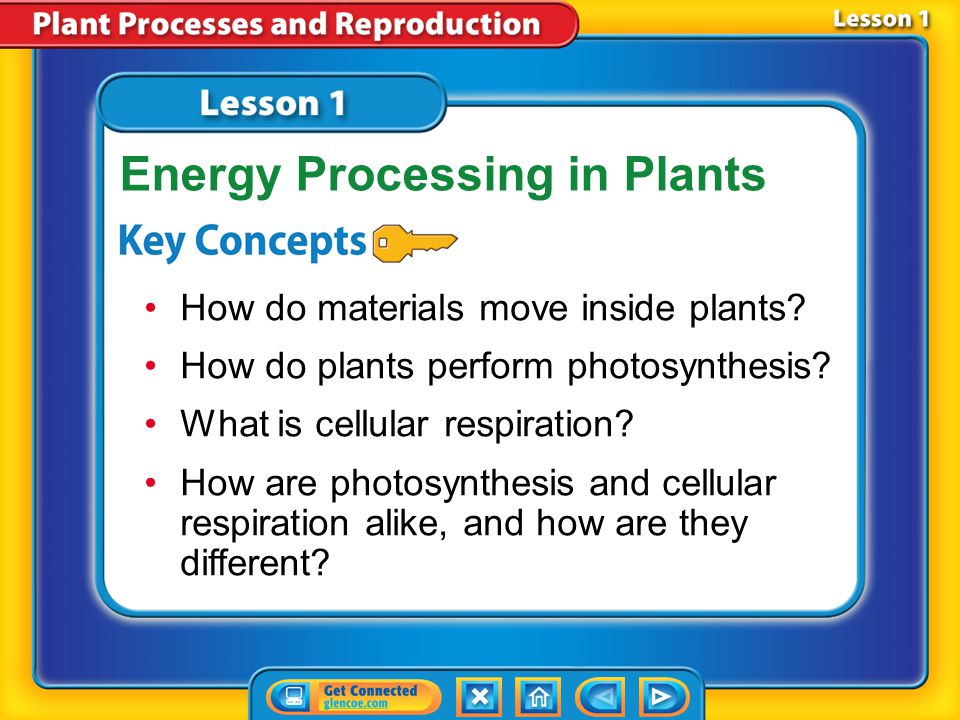 Lesson 1 Reading Guide - KC How do materials move inside plants.
