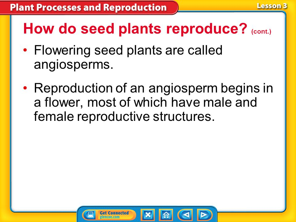 Lesson 3-4 Reproduction in Flowerless Seed Plants