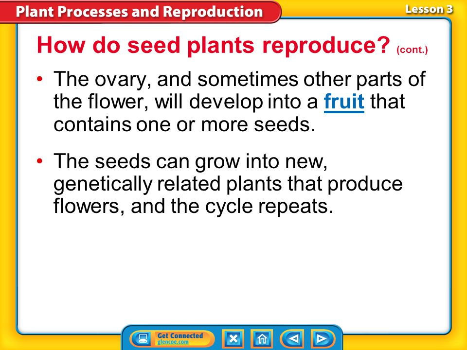 Lesson 3-4 How do seed plants reproduce? (cont.) The female reproductive organ of a flower is the pistil.pistil Pollen can land at the tip of the pist