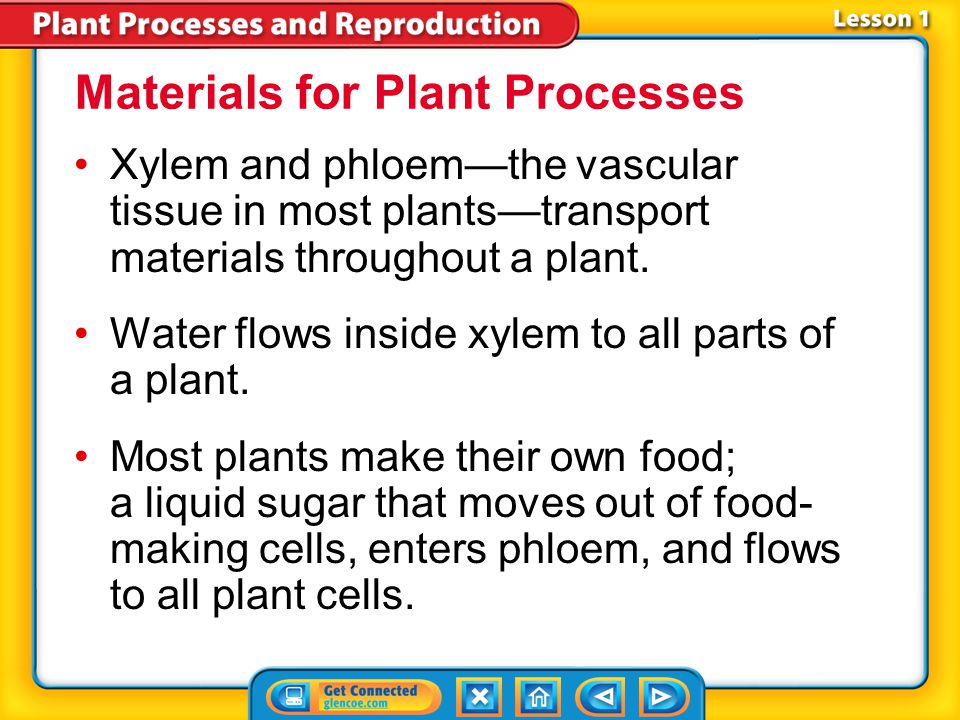 Lesson 1-1 Xylem and phloem—the vascular tissue in most plants—transport materials throughout a plant.