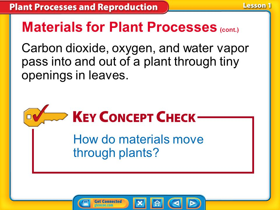 Lesson 3-2 Spores grow by mitosis and cell division and form the haploid generation of a plant.