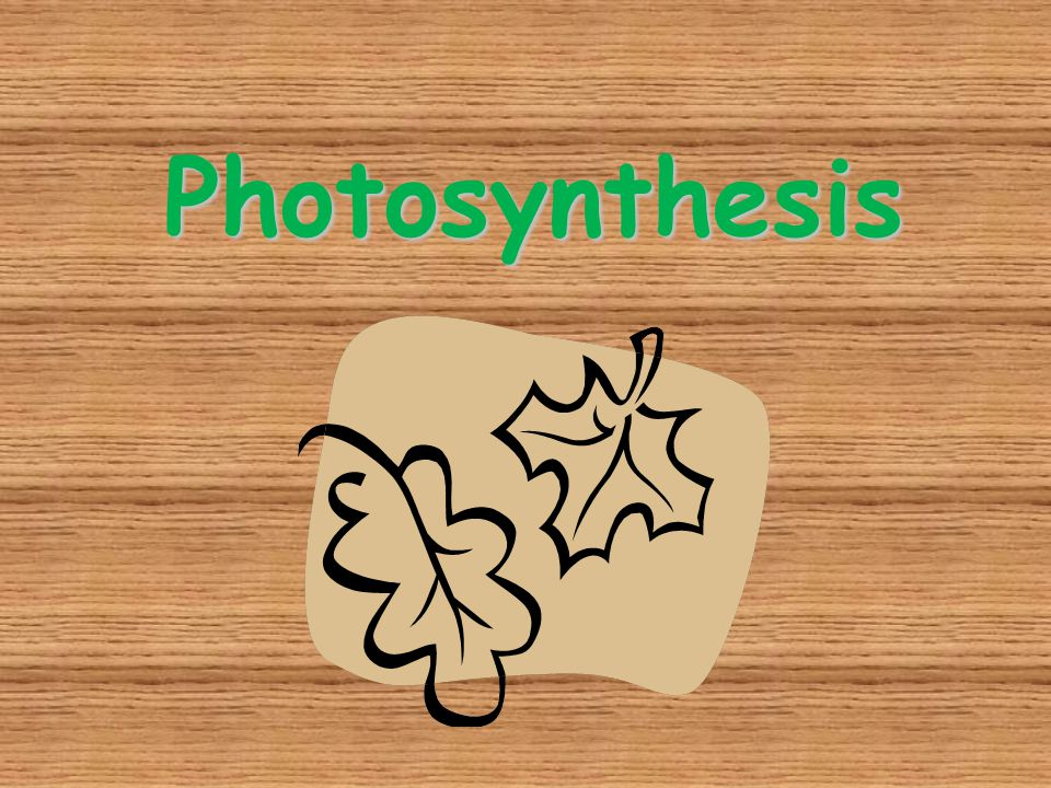 Autotrophs Plants and some other types of organisms that contain chlorophyll are able to use light energy from the sun to produce food.