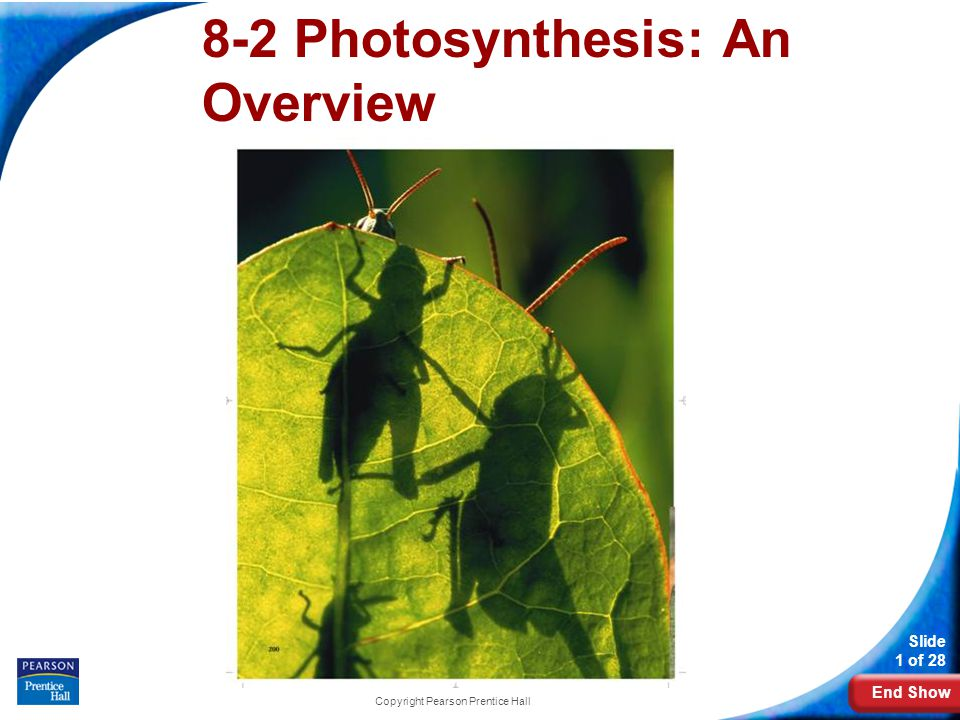 End Show Slide 1 of 28 Copyright Pearson Prentice Hall 8-2 Photosynthesis: An Overview