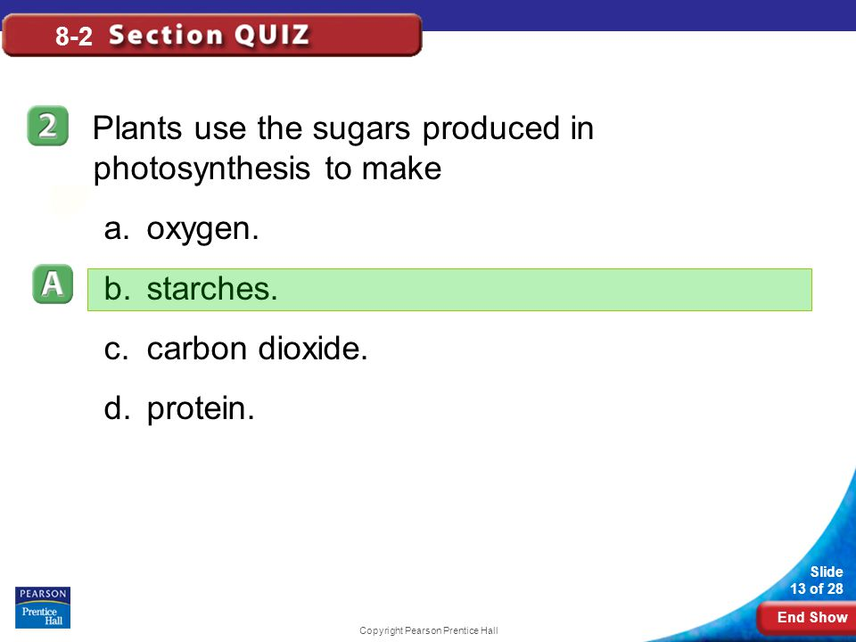 End Show Slide 13 of 28 Copyright Pearson Prentice Hall 8-2 Plants use the sugars produced in photosynthesis to make a.oxygen. b.starches. c.carbon di