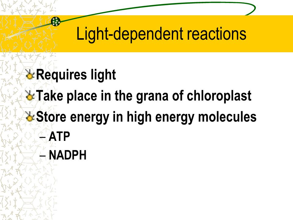 Photosynthesis Dissected: Divided into 2 types of reactions: 1)Light-dependent reactions 2)Light-independent reactions