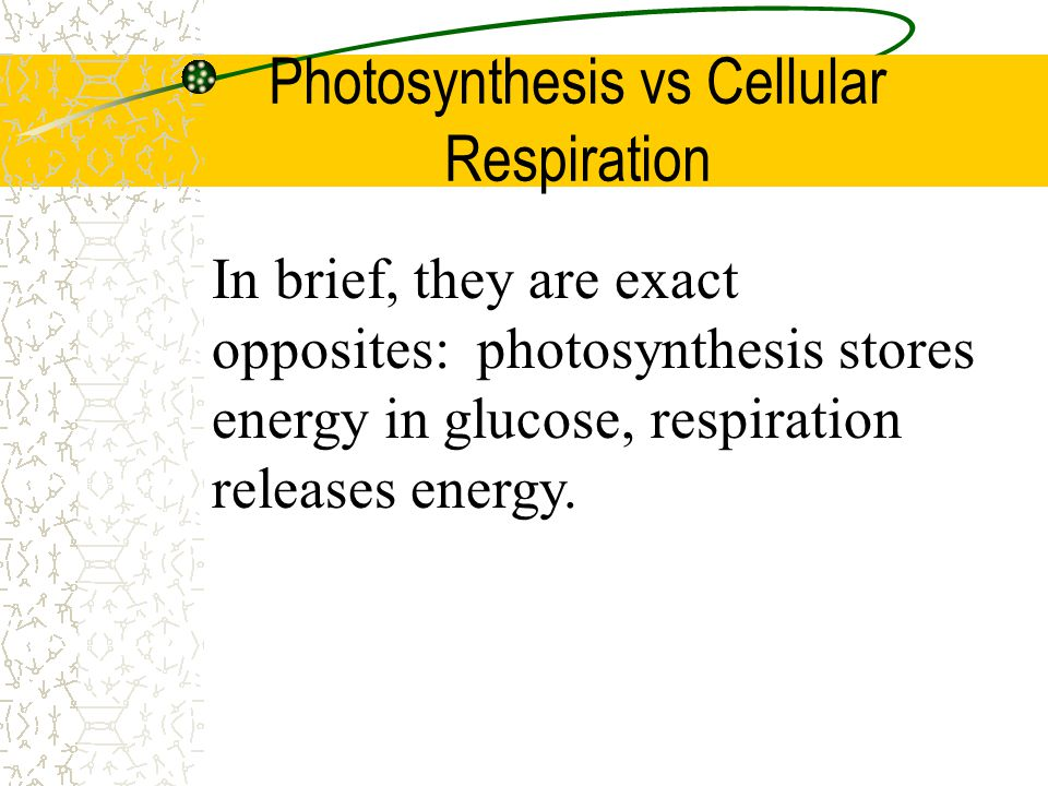 Factors influencing photosynthesis: There are 3 main factors influencing the rate: 1)Light intensity 2)Temperature 3)Water and mineral availability 4)Carbon dioxide level
