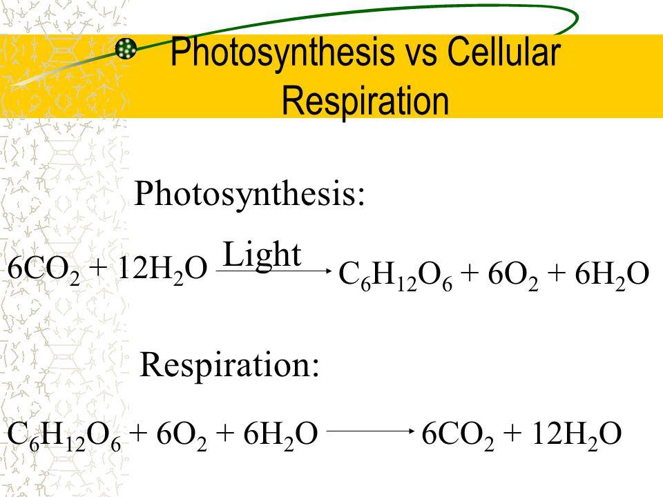 Photosynthesis vs Cellular Respiration Photosynthesis: 6CO 2 + 12H 2 O Light C 6 H 12 O 6 + 6O 2 + 6H 2 O