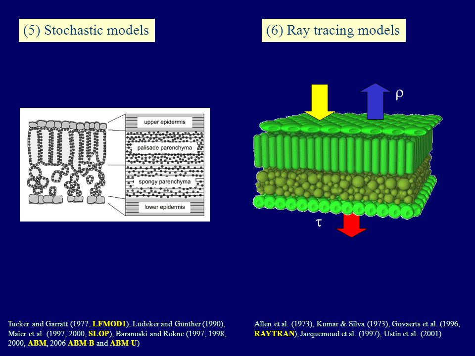 (5) Stochastic models Tucker and Garratt (1977, LFMOD1), Lüdeker and Günther (1990), Maier et al.