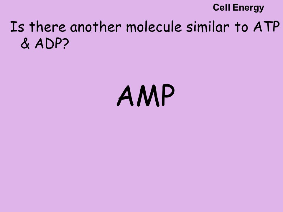 Is there another molecule similar to ATP & ADP? AMP