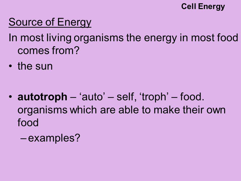 Source of Energy In most living organisms the energy in most food comes from? the sun autotroph – 'auto' – self, 'troph' – food. organisms which are a