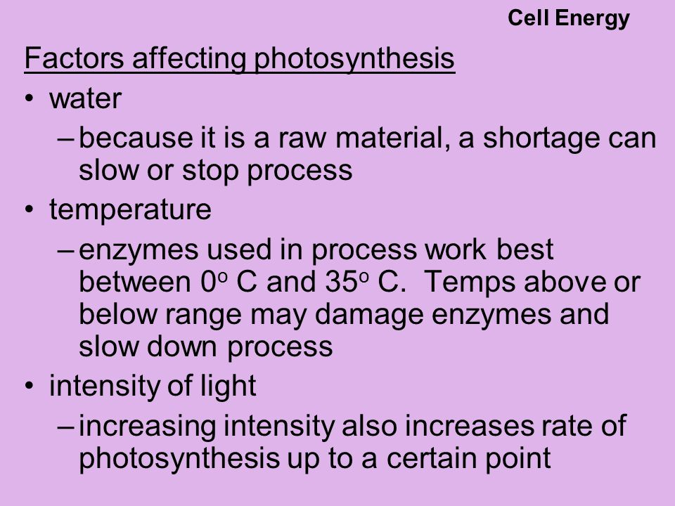 Factors affecting photosynthesis water –because it is a raw material, a shortage can slow or stop process temperature –enzymes used in process work be