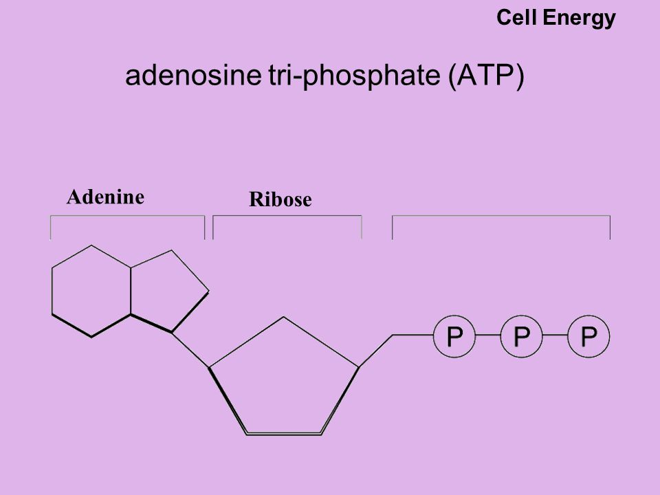 Releasing energy from ATP the ATP molecule carries just enough energy to power a variety of cellular activities active transport – sodium-potassium pump.