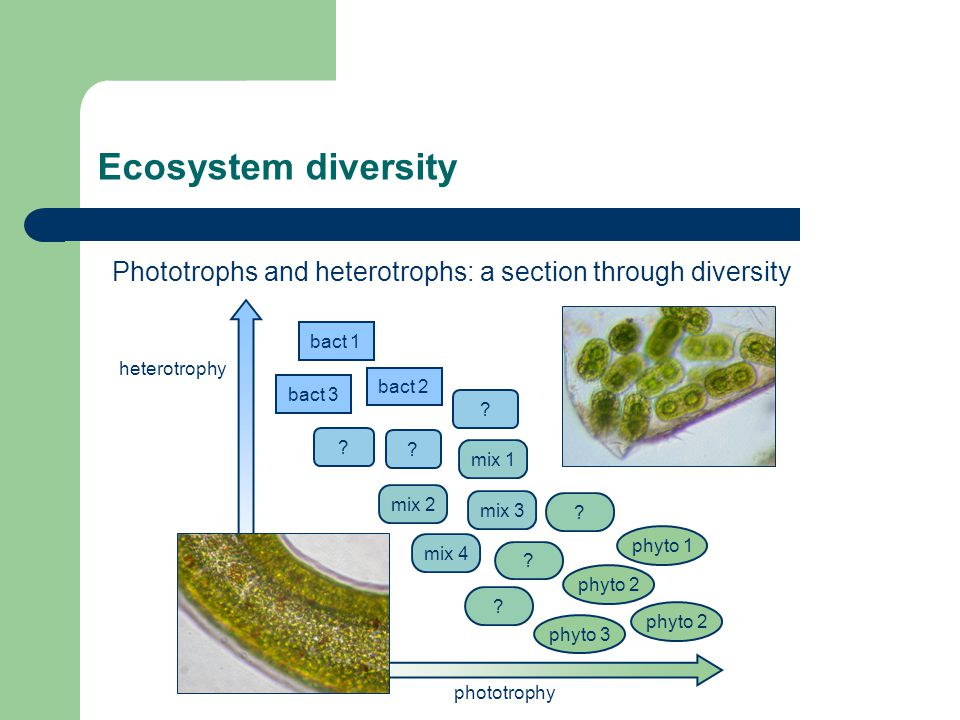 Ecosystem diversity Phototrophs and heterotrophs: a section through diversity phototrophy heterotrophy phyto 2 phyto 1 phyto 3 bact 1 bact 3 bact 2 .