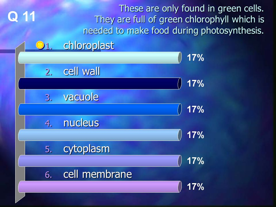 These are only found in green cells. They are full of green chlorophyll which is needed to make food during photosynthesis. 1. chloroplast 2. cell wal