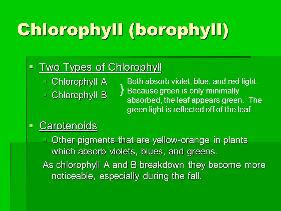 Chlorophyll (borophyll)  Two Types of Chlorophyll  Chlorophyll A  Chlorophyll B  Carotenoids  Other pigments that are yellow-orange in plants whi