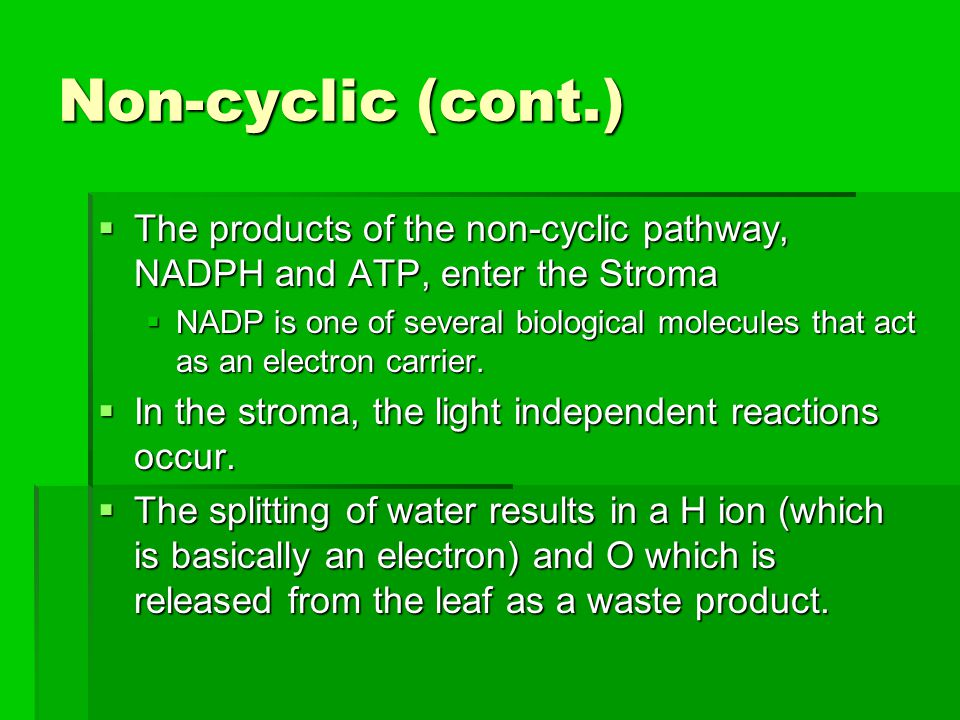 Non-cyclic (cont.)  The products of the non-cyclic pathway, NADPH and ATP, enter the Stroma  NADP is one of several biological molecules that act as