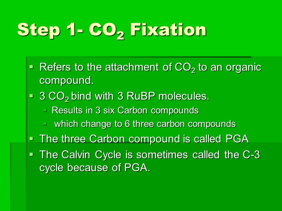 Step 1- CO 2 Fixation  Refers to the attachment of CO 2 to an organic compound.  3 CO 2 bind with 3 RuBP molecules.  Results in 3 six Carbon compou
