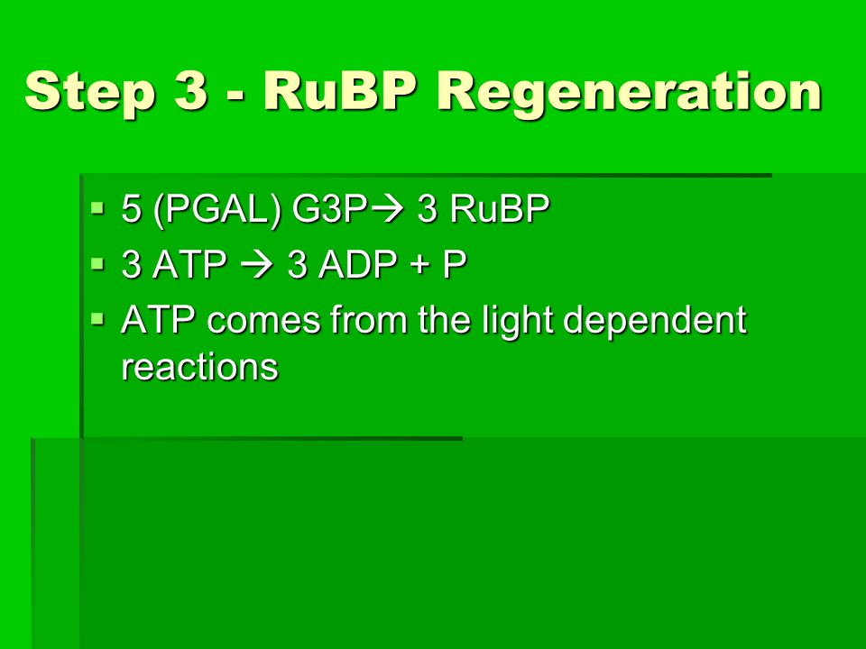 Step 3 - RuBP Regeneration  5 (PGAL) G3P  3 RuBP  3 ATP  3 ADP + P  ATP comes from the light dependent reactions