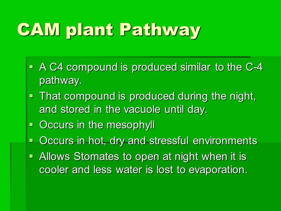 CAM plant Pathway  A C4 compound is produced similar to the C-4 pathway.  That compound is produced during the night, and stored in the vacuole unti