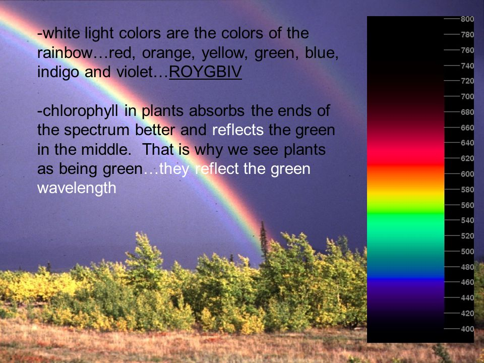 -white light colors are the colors of the rainbow…red, orange, yellow, green, blue, indigo and violet…ROYGBIV -chlorophyll in plants absorbs the ends
