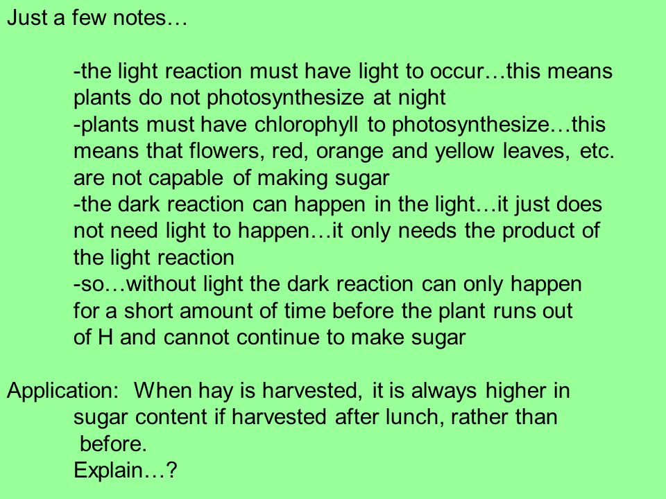 Just a few notes… -the light reaction must have light to occur…this means plants do not photosynthesize at night -plants must have chlorophyll to photosynthesize…this means that flowers, red, orange and yellow leaves, etc.