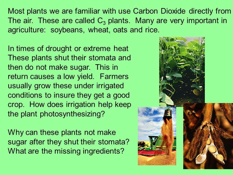 Most plants we are familiar with use Carbon Dioxide directly from The air.