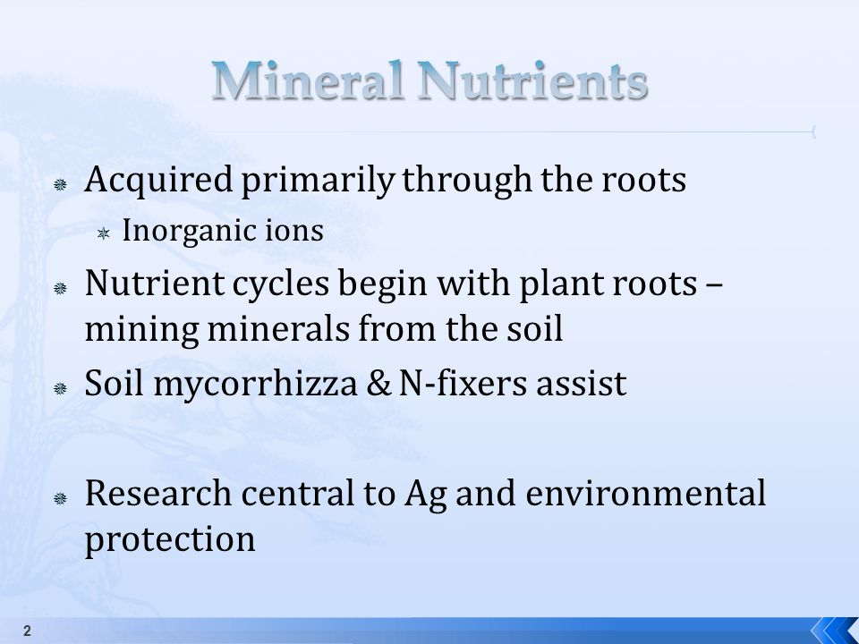  Acquired primarily through the roots  Inorganic ions  Nutrient cycles begin with plant roots – mining minerals from the soil  Soil mycorrhizza & N-fixers assist  Research central to Ag and environmental protection 2