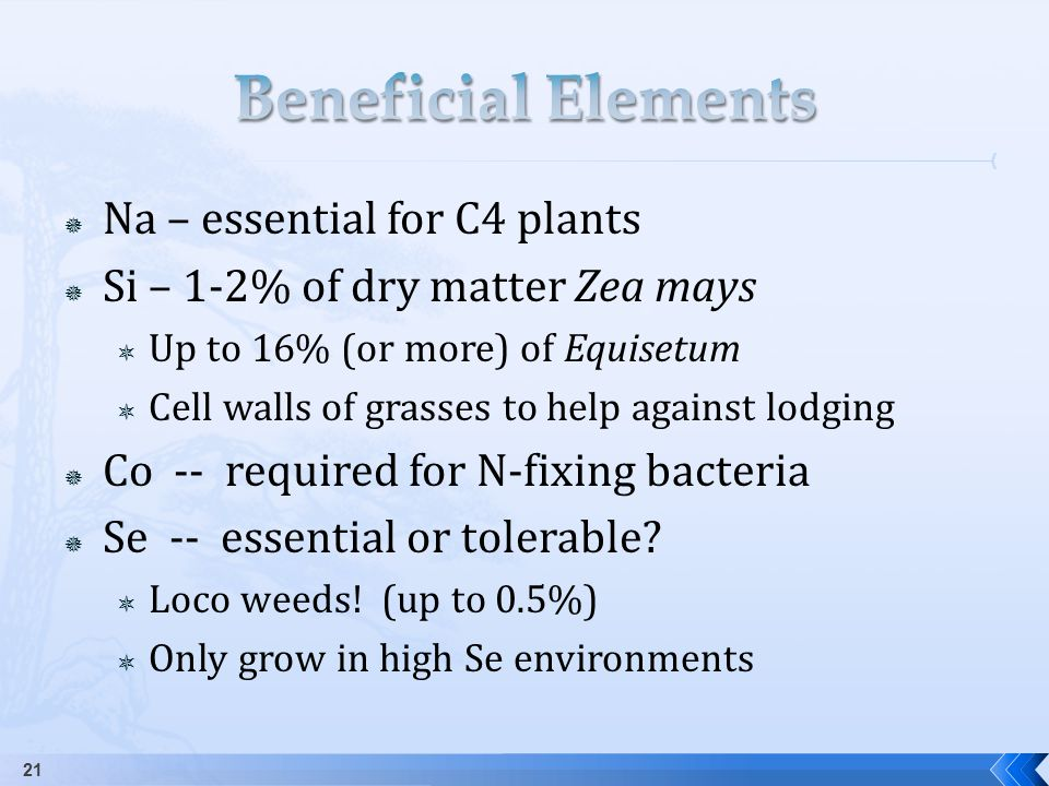  Na – essential for C4 plants  Si – 1-2% of dry matter Zea mays  Up to 16% (or more) of Equisetum  Cell walls of grasses to help against lodging  Co -- required for N-fixing bacteria  Se -- essential or tolerable.